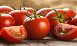 Comment cultiver des tomates bio ? De la plantation à la récolte